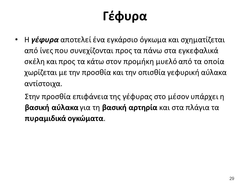 Προμήκης μυελός