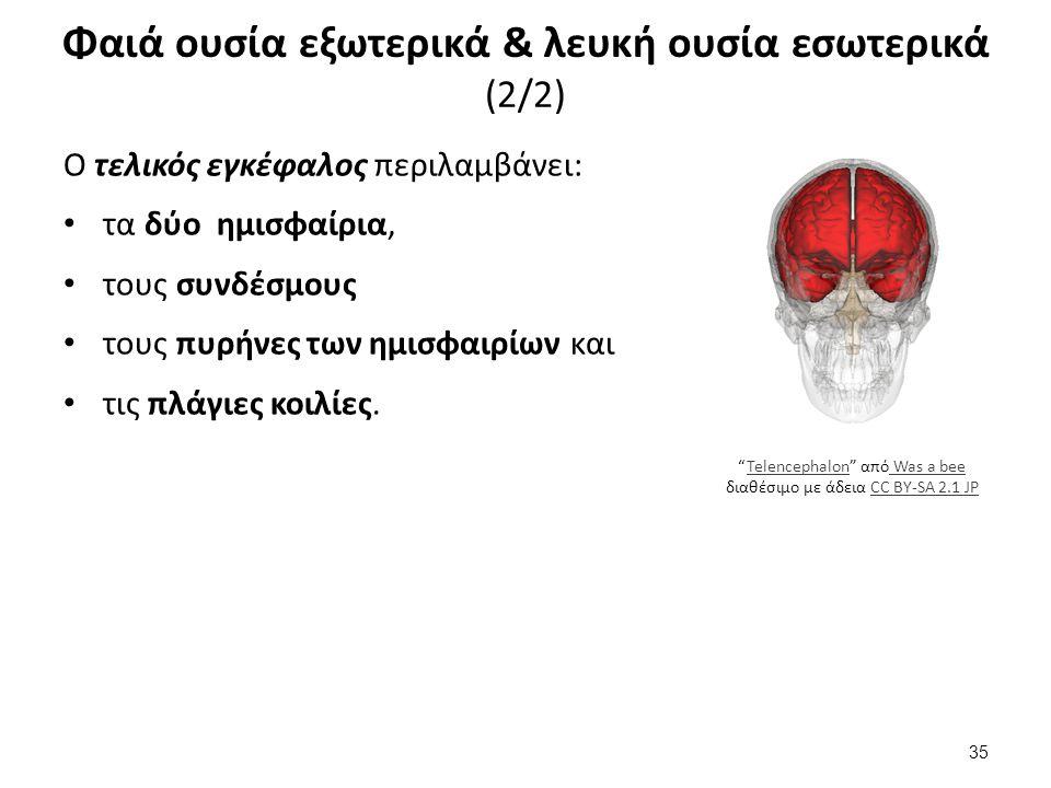 Μέρη εγκεφάλου (1/4) ο διάμεσος εγκέφαλος αποτελείται από: