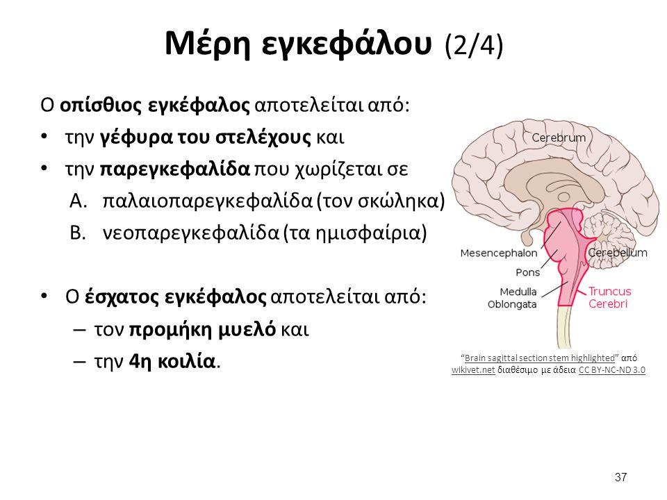 Μέρη εγκεφάλου (3/4) Άλλα μέρη του εγκεφάλου είναι: