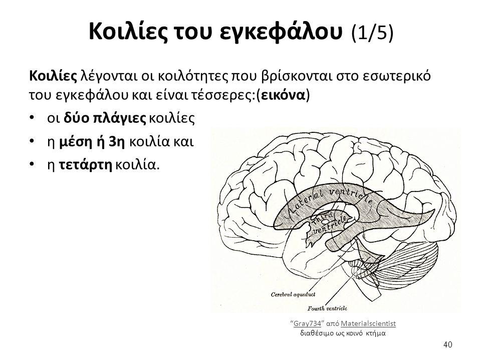 Κοιλίες του εγκεφάλου (2/5)