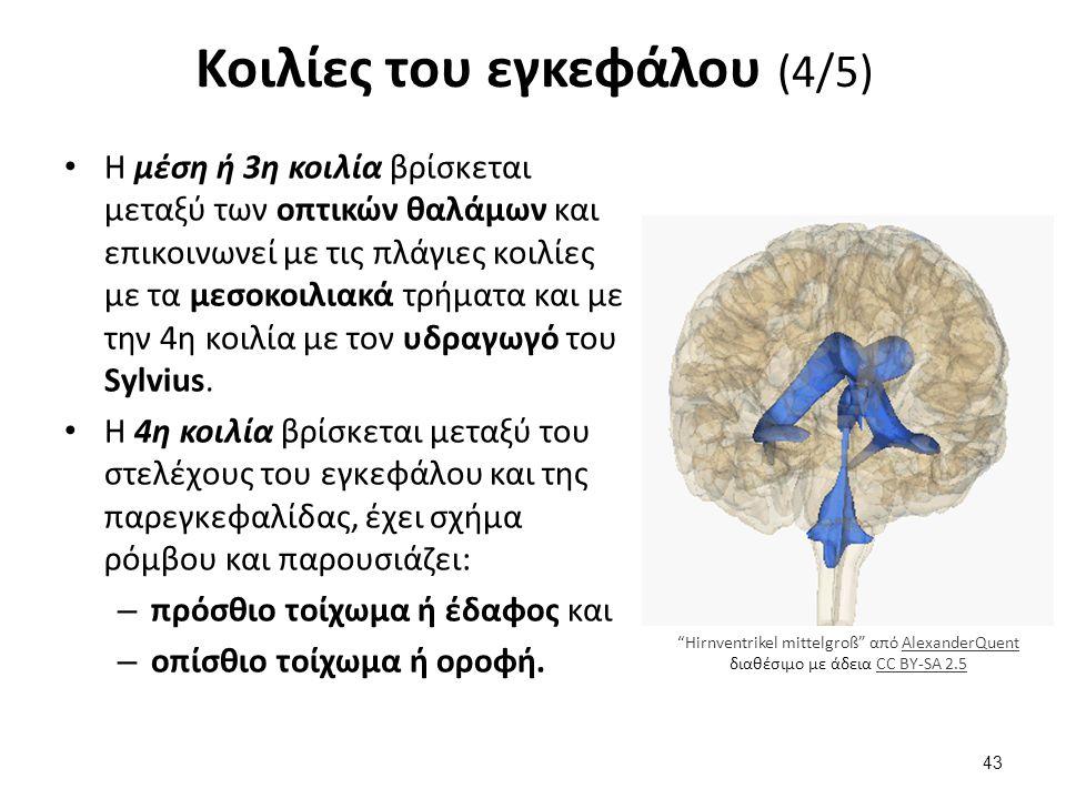 Κοιλίες του εγκεφάλου (5/5)