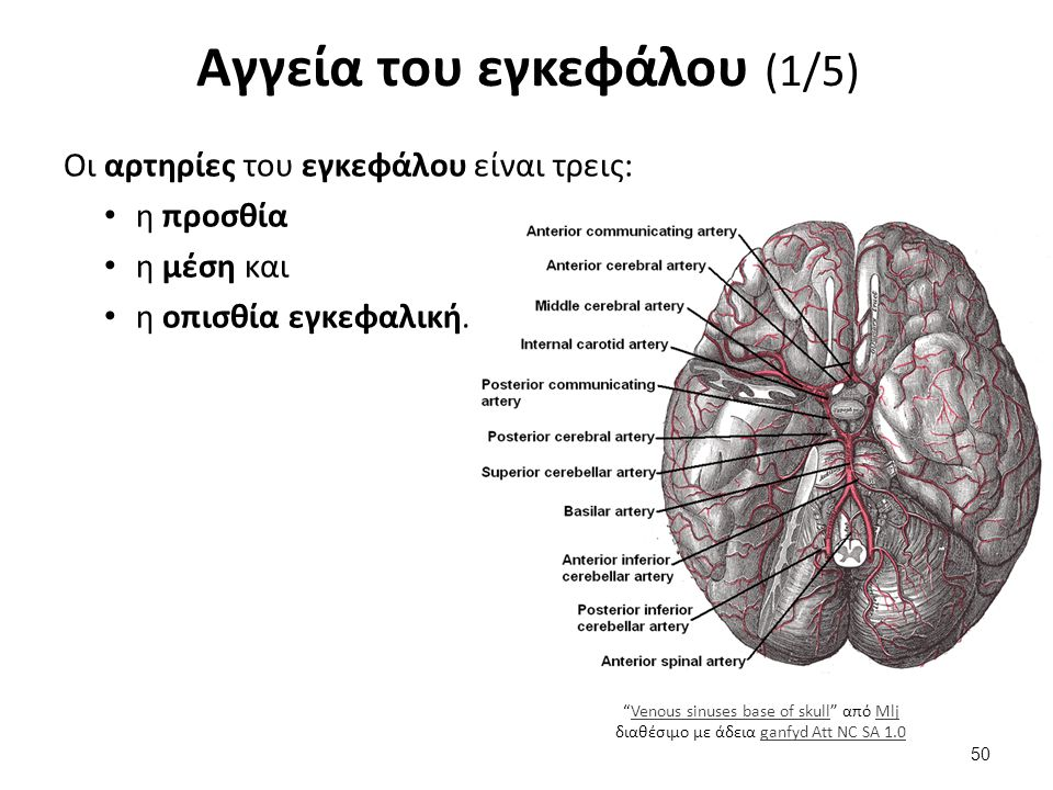 Αγγεία του εγκεφάλου (2/5)