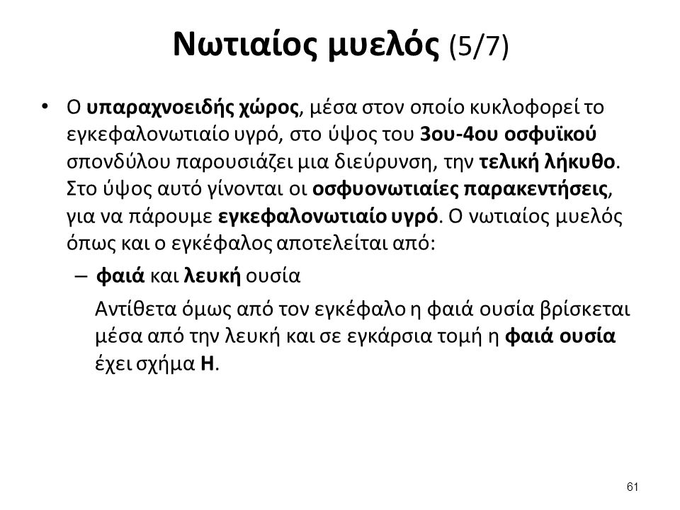 Νωτιαίος μυελός (6/7) Τα κάθετα σκέλη του οποίου σχηματίζουν: