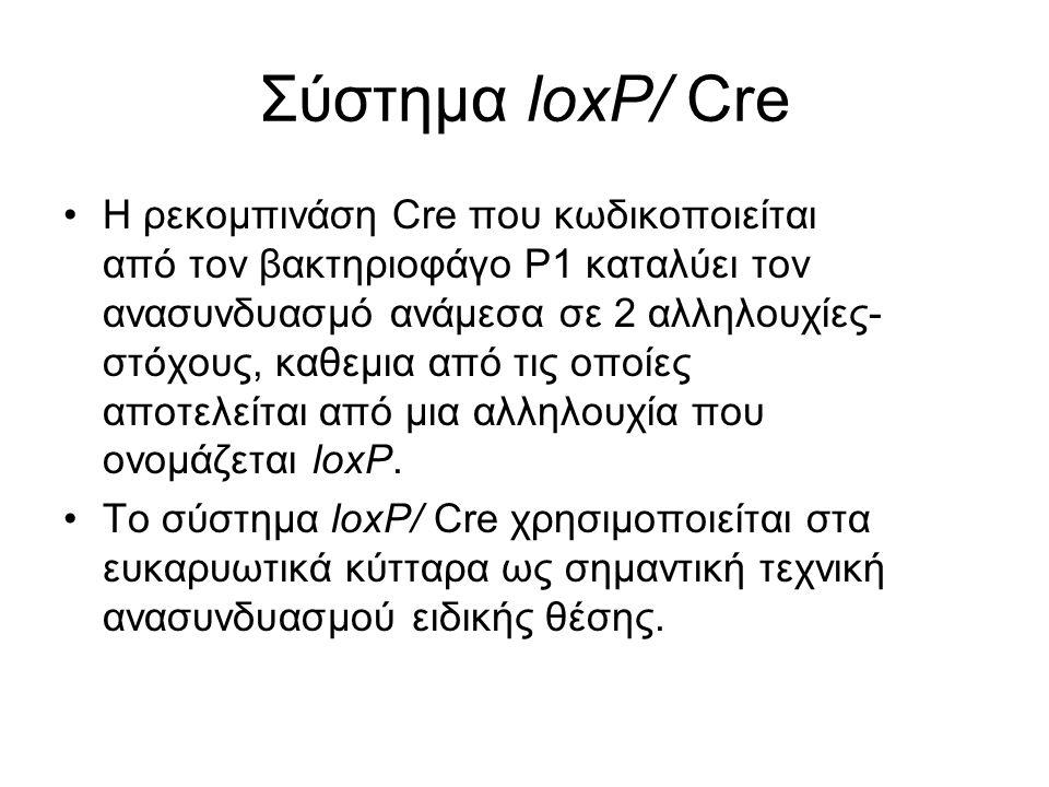 Σύστημα loxP/ Cre