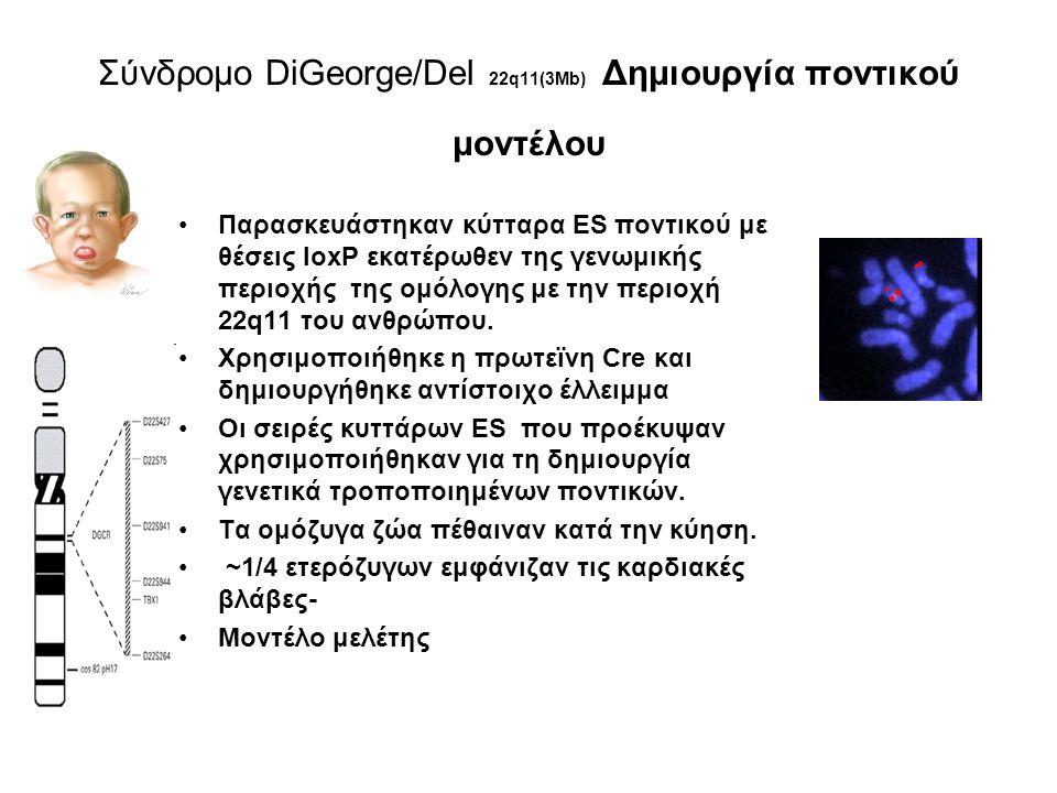 Σύνδρομο DiGeorge/Del 22q11(3Μb) Δημιουργία ποντικού μοντέλου
