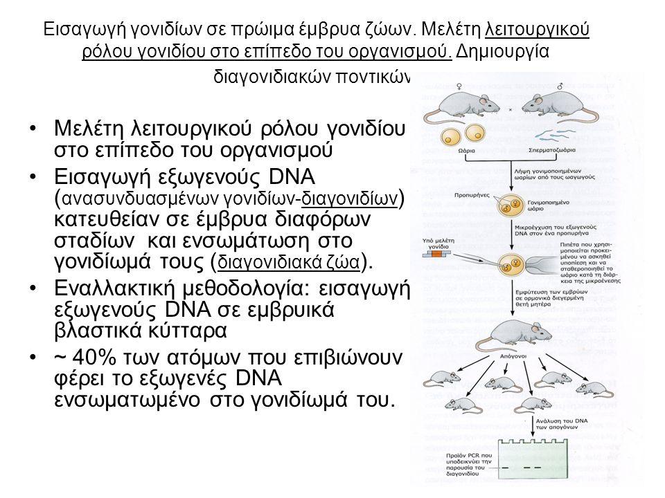 Εισαγωγή γονιδίων σε πρώιμα έμβρυα ζώων