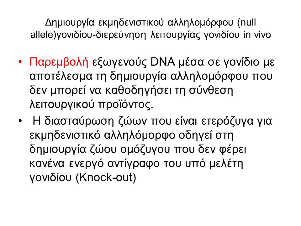 Δημιουργία εκμηδενιστικού αλληλομόρφου (null allele)γονιδίου-διερεύνηση λειτουργίας γονιδίου in vivo
