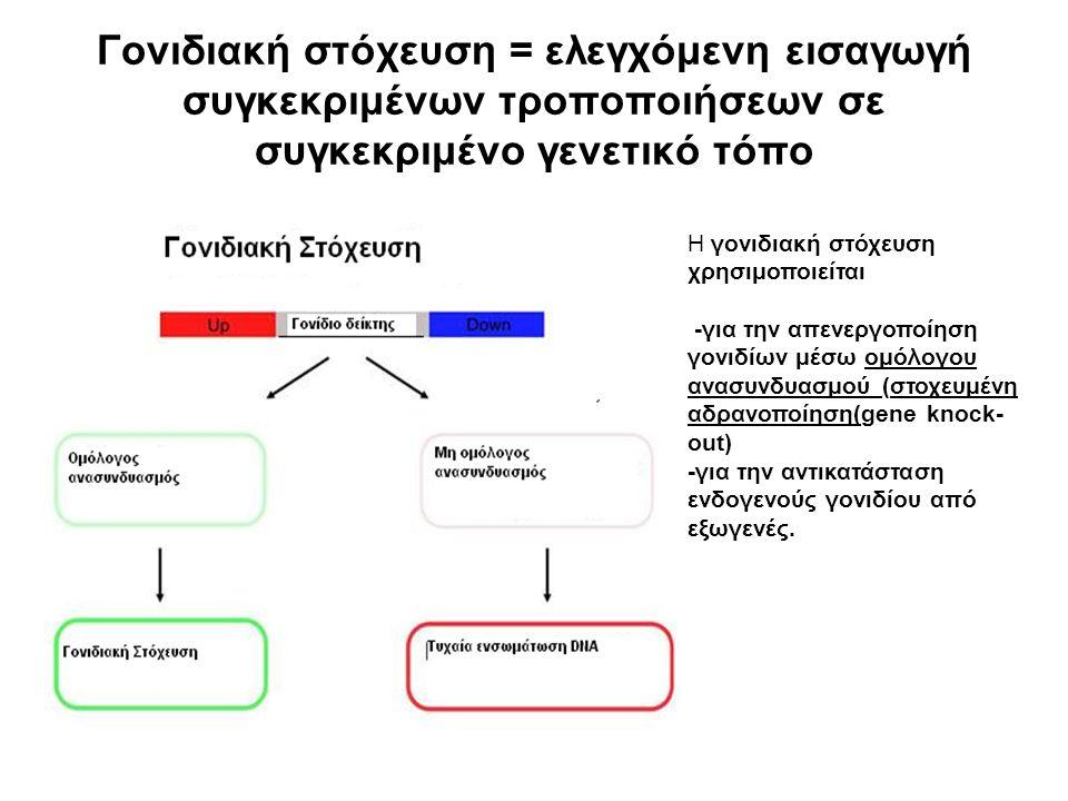 Γονιδιακή στόχευση = ελεγχόμενη εισαγωγή συγκεκριμένων τροποποιήσεων σε συγκεκριμένο γενετικό τόπο