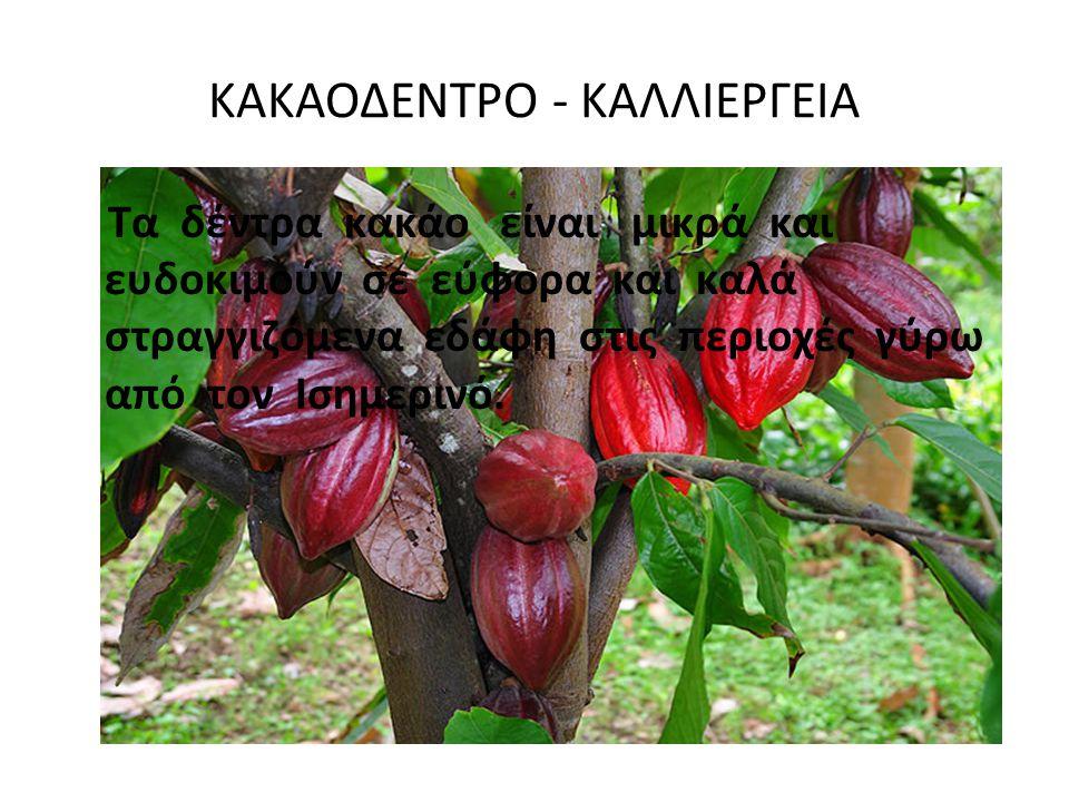 ΚΑΚΑΟΔΕΝΤΡΟ - ΚΑΛΛΙΕΡΓΕΙΑ