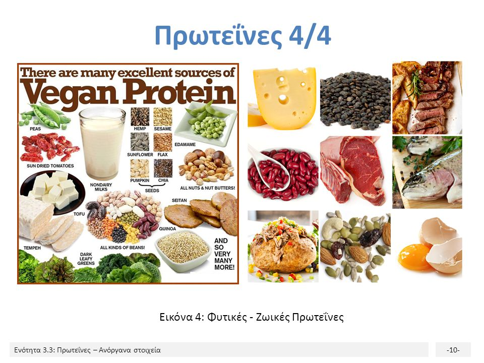 Πρωτεΐνες 4/4 Εικόνα 4: Φυτικές - Ζωικές Πρωτεΐνες