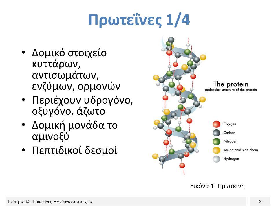 Πρωτεΐνες 1/4 Δομικό στοιχείο κυττάρων, αντισωμάτων, ενζύμων, ορμονών