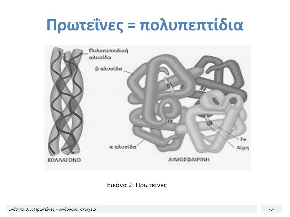 Πρωτεΐνες = πολυπεπτίδια
