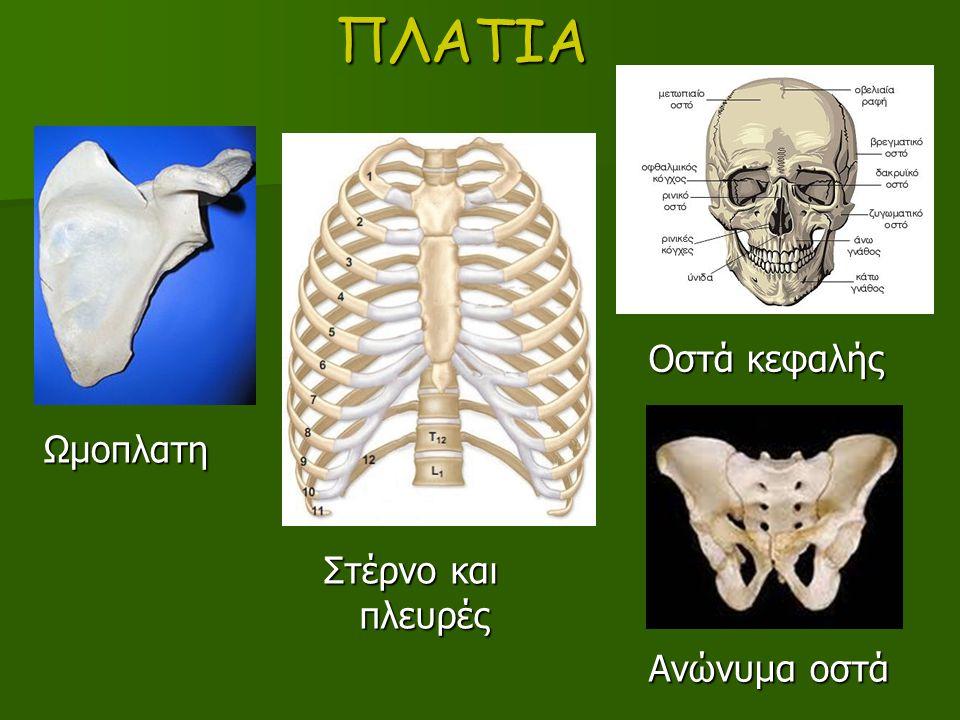 ΠΛΑΤΙΑ Οστά κεφαλής Ωμοπλατη Στέρνο και πλευρές Ανώνυμα οστά