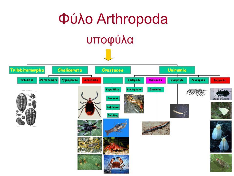 Φύλο Arthropoda υποφύλα