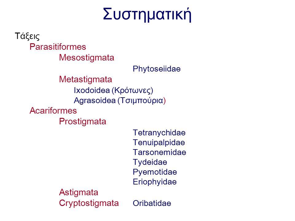 Συστηματική Τάξεις Parasitiformes Mesostigmata Phytoseiidae