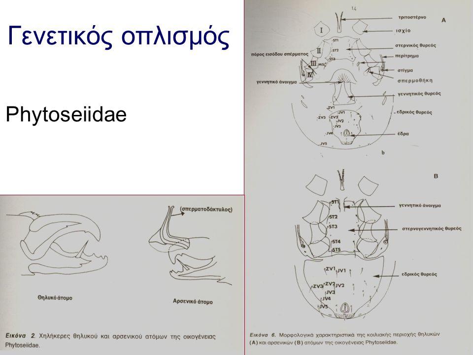 Γενετικός οπλισμός Phytoseiidae