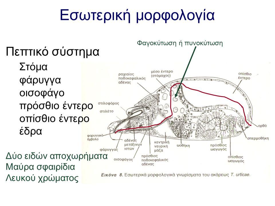 Εσωτερική μορφολογία Πεπτικό σύστημα Στόμα φάρυγγα οισοφάγο