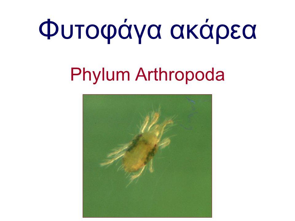 Φυτοφάγα ακάρεα Phylum Arthropoda