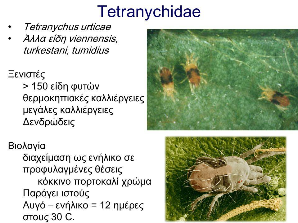 Tetranychidae Tetranychus urticae Άλλα είδη viennensis,