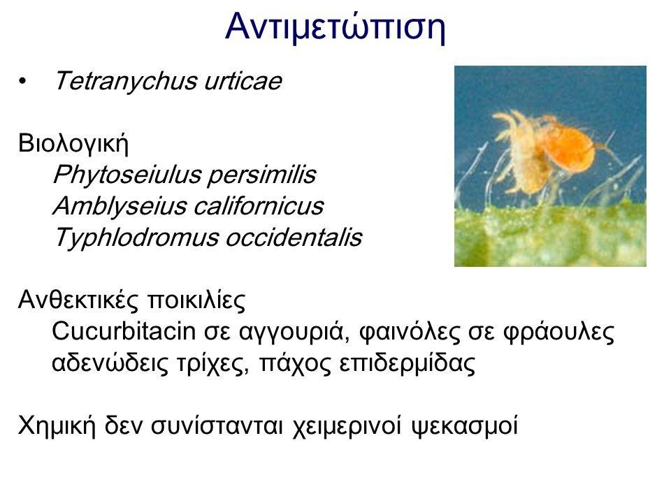 Αντιμετώπιση Tetranychus urticae Βιολογική Phytoseiulus persimilis