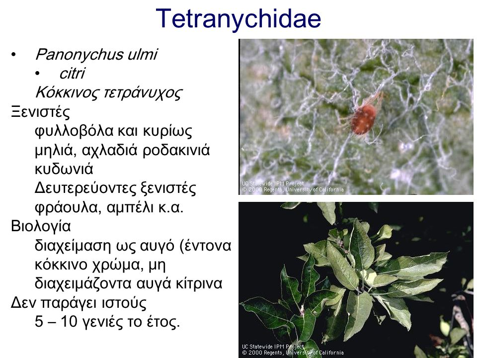Tetranychidae Panonychus ulmi citri Κόκκινος τετράνυχος Ξενιστές