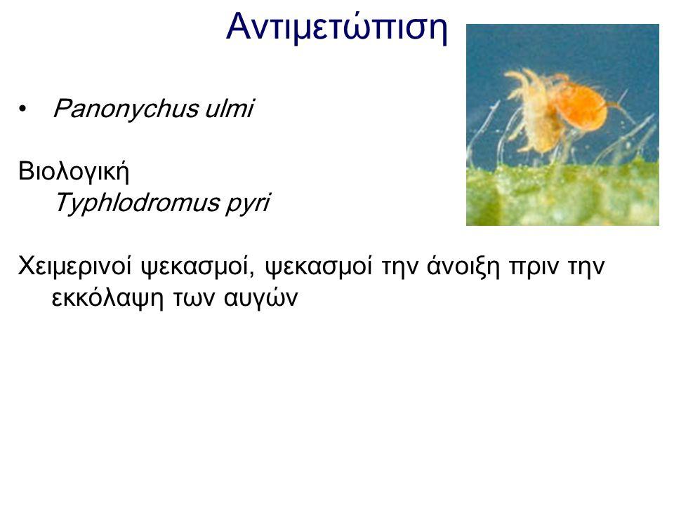 Αντιμετώπιση Panonychus ulmi Βιολογική Typhlodromus pyri