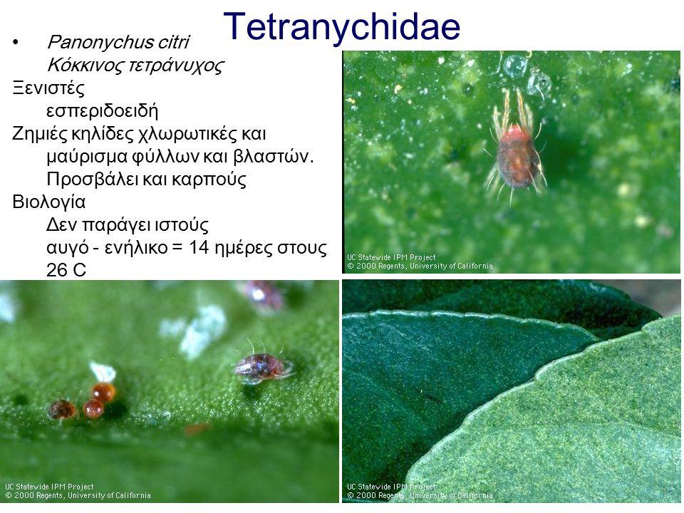 Tetranychidae Panonychus citri Κόκκινος τετράνυχος Ξενιστές