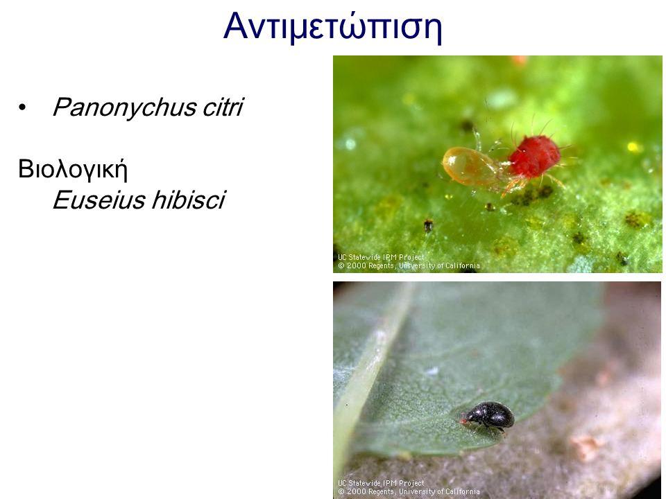 Αντιμετώπιση Panonychus citri Βιολογική Euseius hibisci