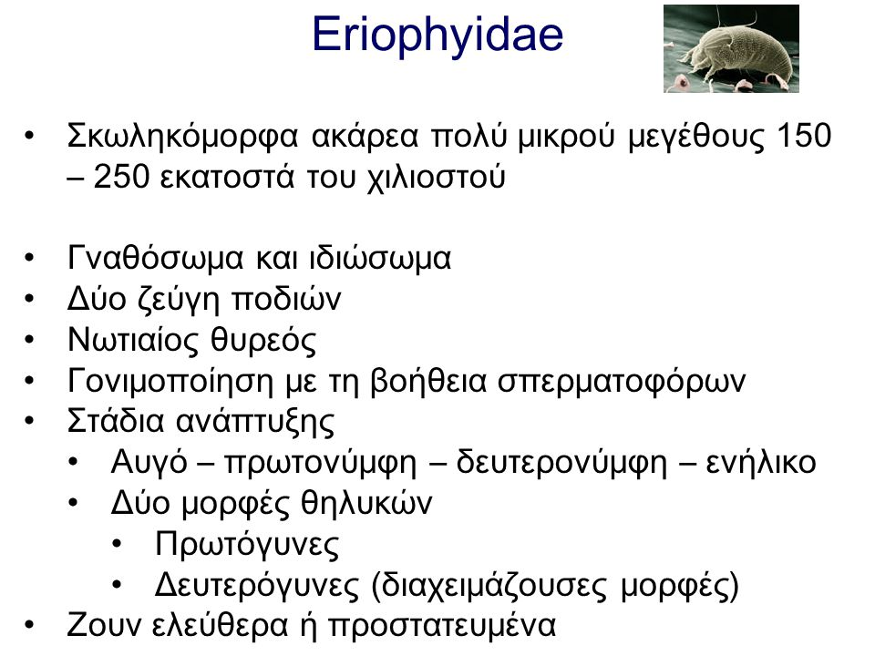 Eriophyidae Σκωληκόμορφα ακάρεα πολύ μικρού μεγέθους 150 – 250 εκατοστά του χιλιοστού. Γναθόσωμα και ιδιώσωμα.