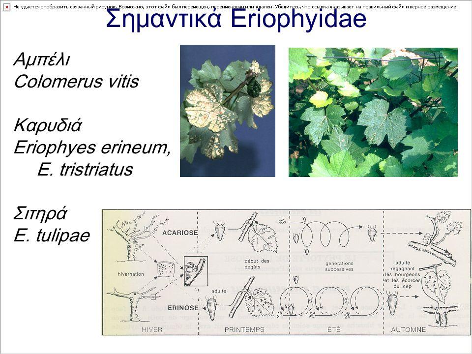Σημαντικά Eriophyidae