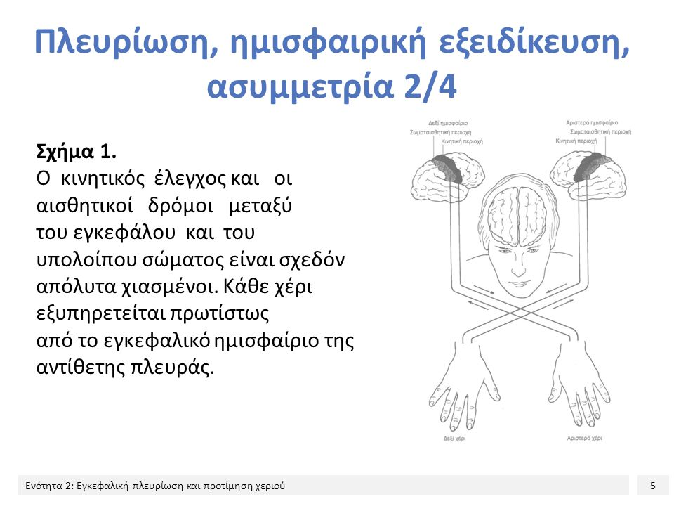Πλευρίωση, ημισφαιρική εξειδίκευση, ασυμμετρία 2/4
