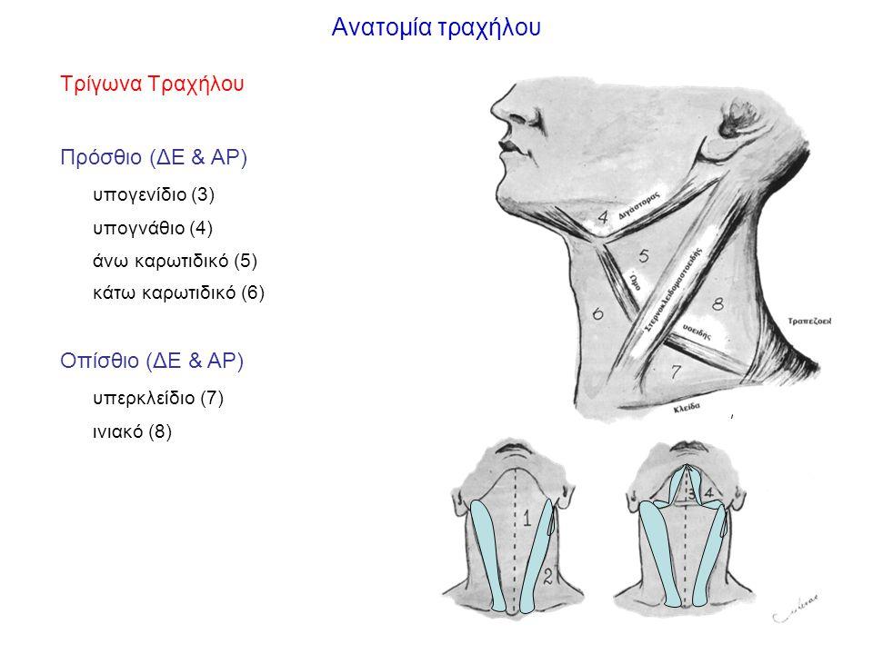 Ανατομία τραχήλου Τρίγωνα Τραχήλου Πρόσθιο (ΔΕ & ΑΡ) υπογενίδιο (3)