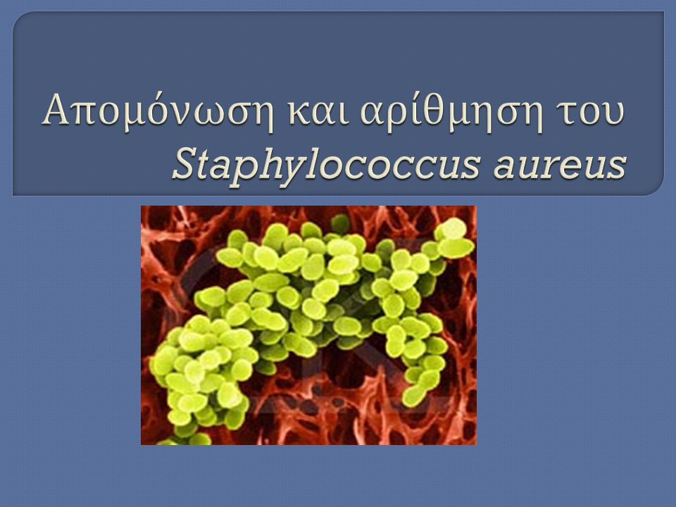 Απομόνωση και αρίθμηση του Staphylococcus aureus