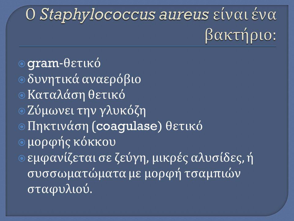 Ο Staphylococcus aureus είναι ένα βακτήριο: