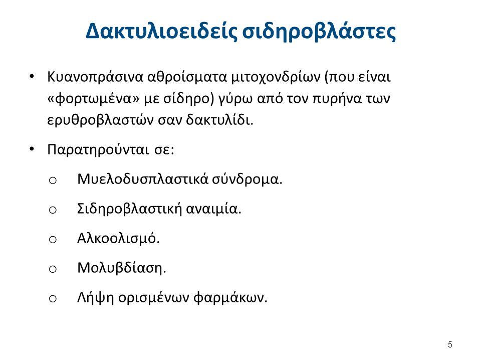 Ορθοχρωματικός (ή ορθοχρωματόφιλος) ερυθροβλάστης