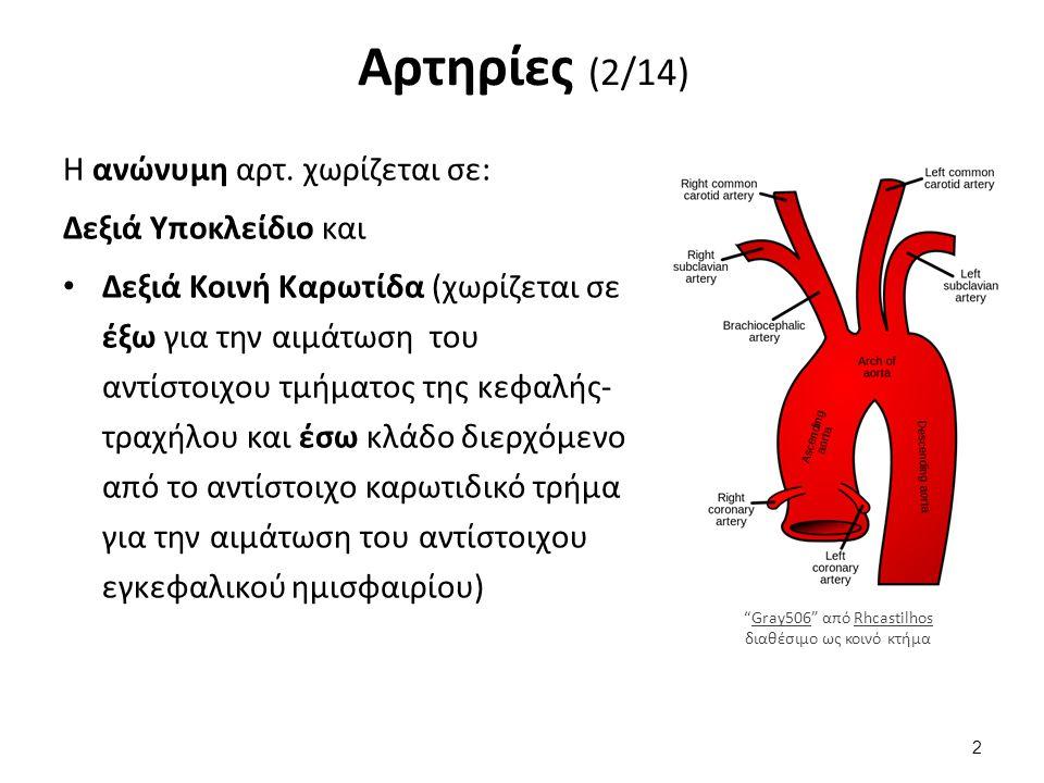 Αρτηρίες (3/14) Η κάθε έξω καρωτίδα δίνει τους κλάδους: