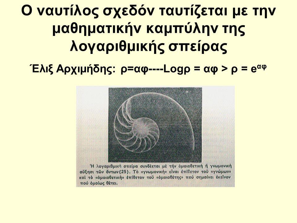 Ο ναυτίλος σχεδόν ταυτίζεται με την μαθηματικήν καμπύλην της λογαριθμικής σπείρας