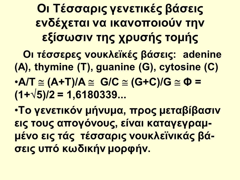 Οι Τέσσαρις γενετικές βάσεις ενδέχεται να ικανοποιούν την εξίσωσιν της χρυσής τομής