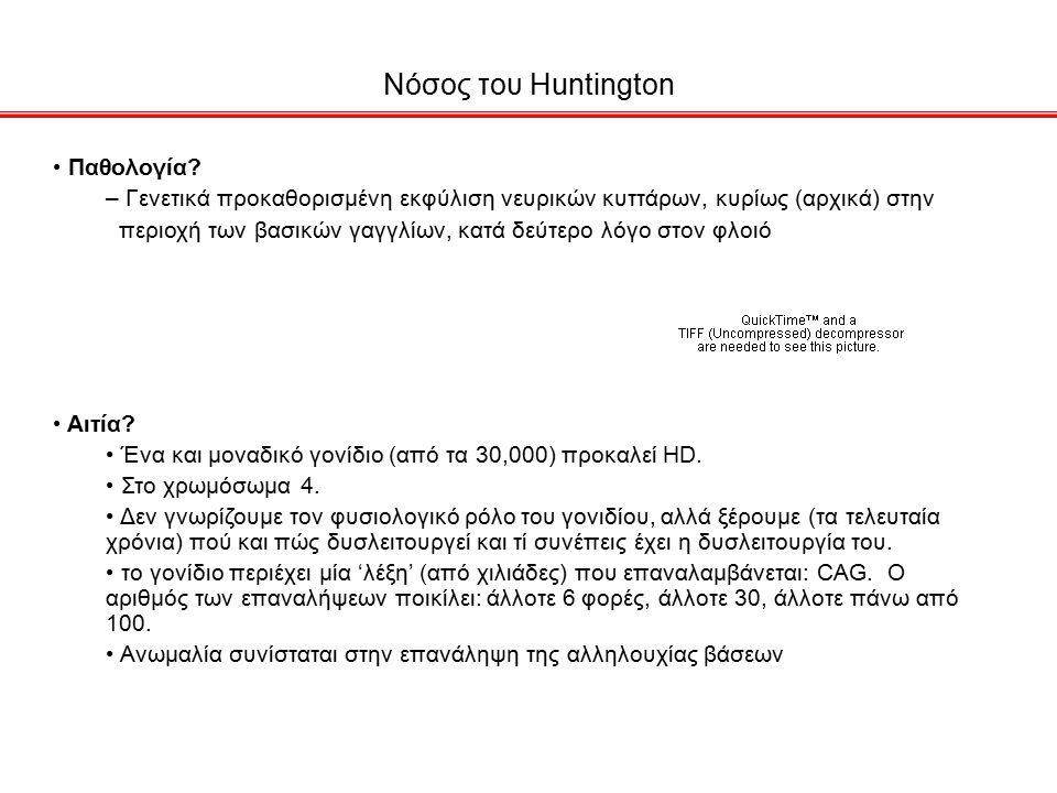 Νόσος του Huntington Παθολογία