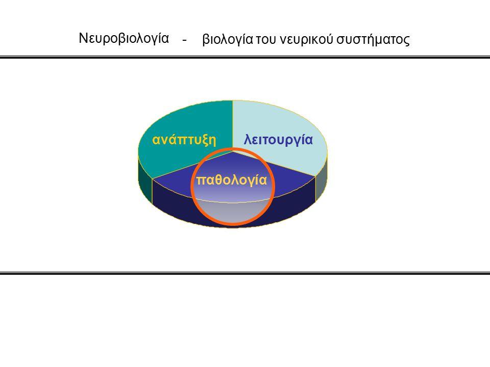 - βιολογία του νευρικού συστήματος