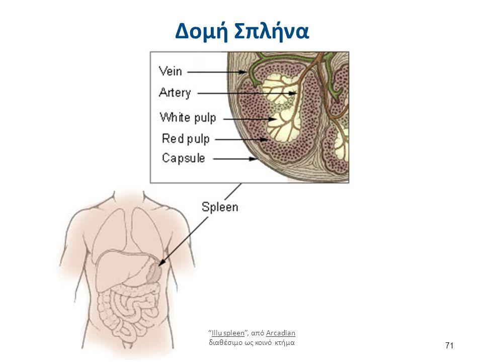 Κληρονομική Σφαιροκυττάρωση Ωσμωτική Ευθραυστότητα