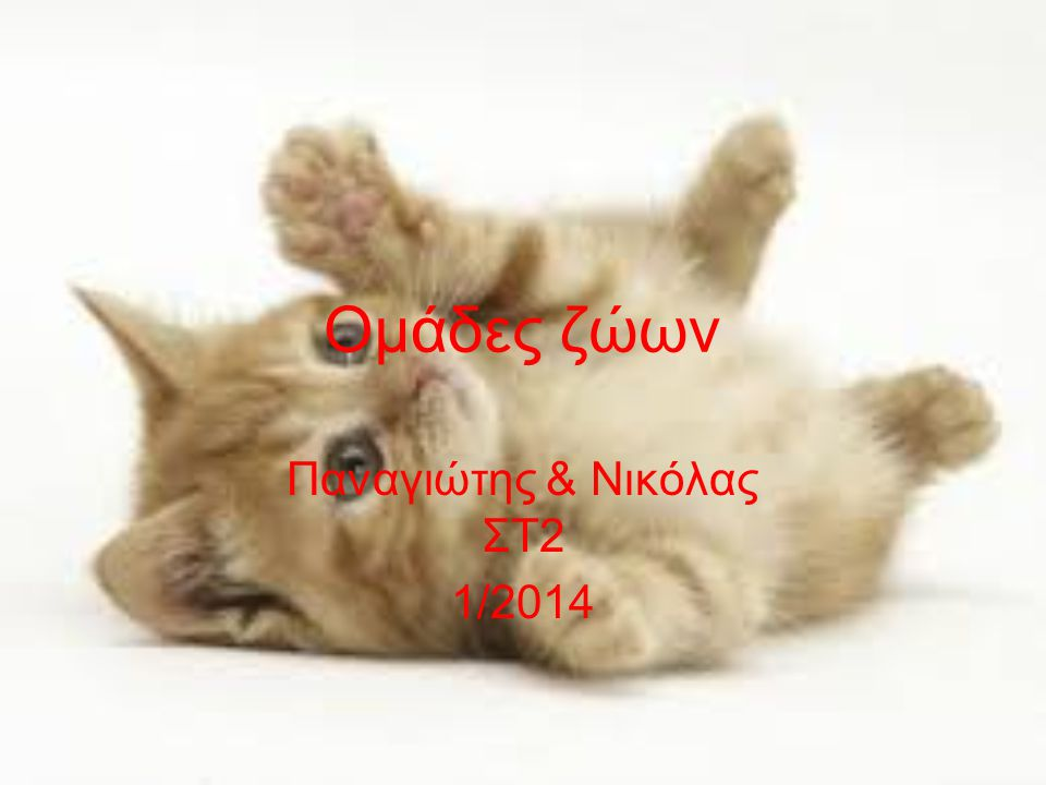 Παναγιώτης & Νικόλας ΣΤ2 1/2014