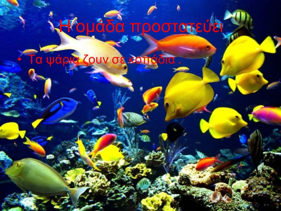 Η ομάδα προστατεύει Τα ψάρια ζουν σε κοπάδια .