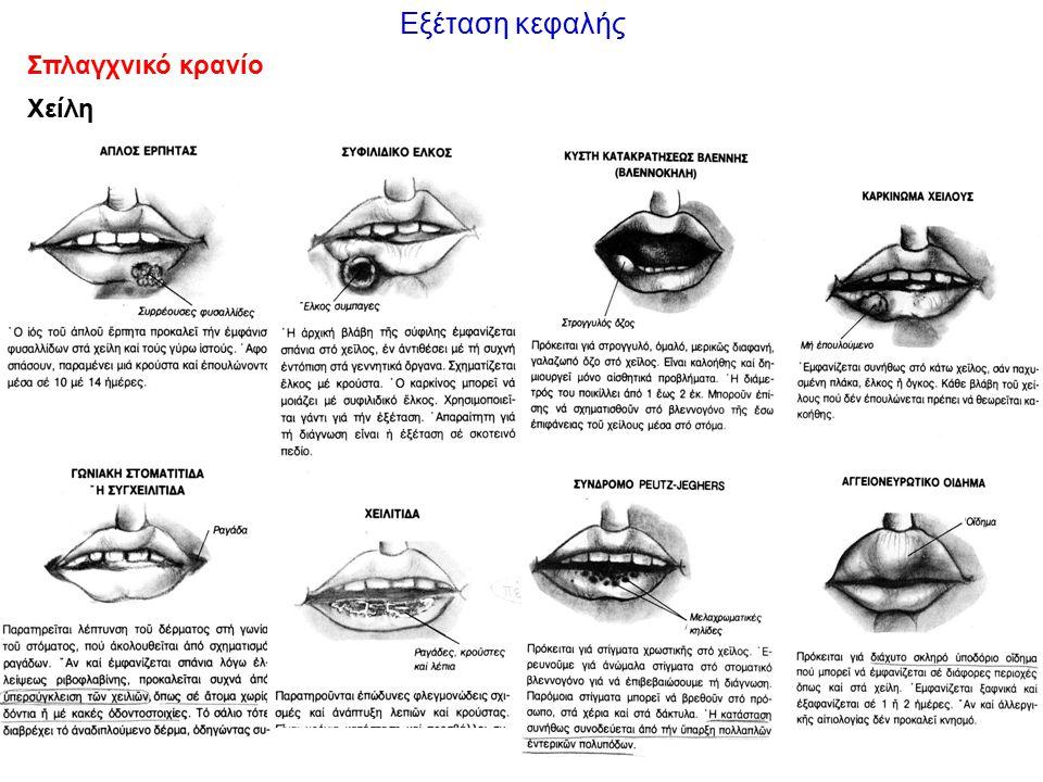 Εξέταση κεφαλής Σπλαγχνικό κρανίο Χείλη