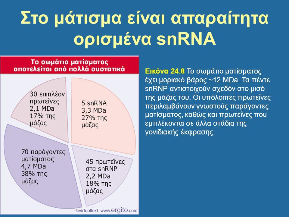 Στο μάτισμα είναι απαραίτητα ορισμένα snRNA