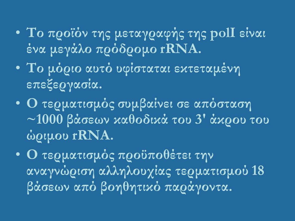 Το προϊόν της μεταγραφής της polI είναι ένα μεγάλο πρόδρομο rRNA.