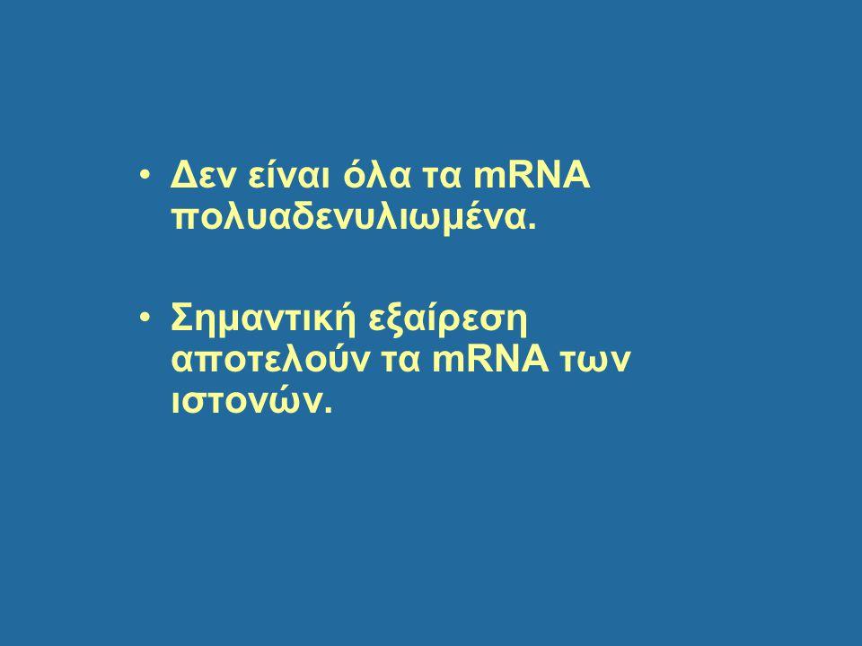 Δεν είναι όλα τα mRNA πολυαδενυλιωμένα.