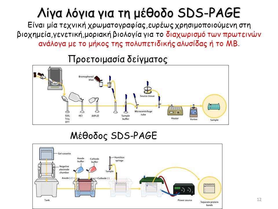 Λίγα λόγια για τη μέθοδο SDS-PAGE Είναι μία τεχνική χρωματογραφίας,ευρέως χρησιμοποιούμενη στη βιοχημεία,γενετική,μοριακή βιολογία για το διαχωρισμό των πρωτεινών ανάλογα με το μήκος της πολυπετιδικής αλυσίδας ή το ΜΒ.