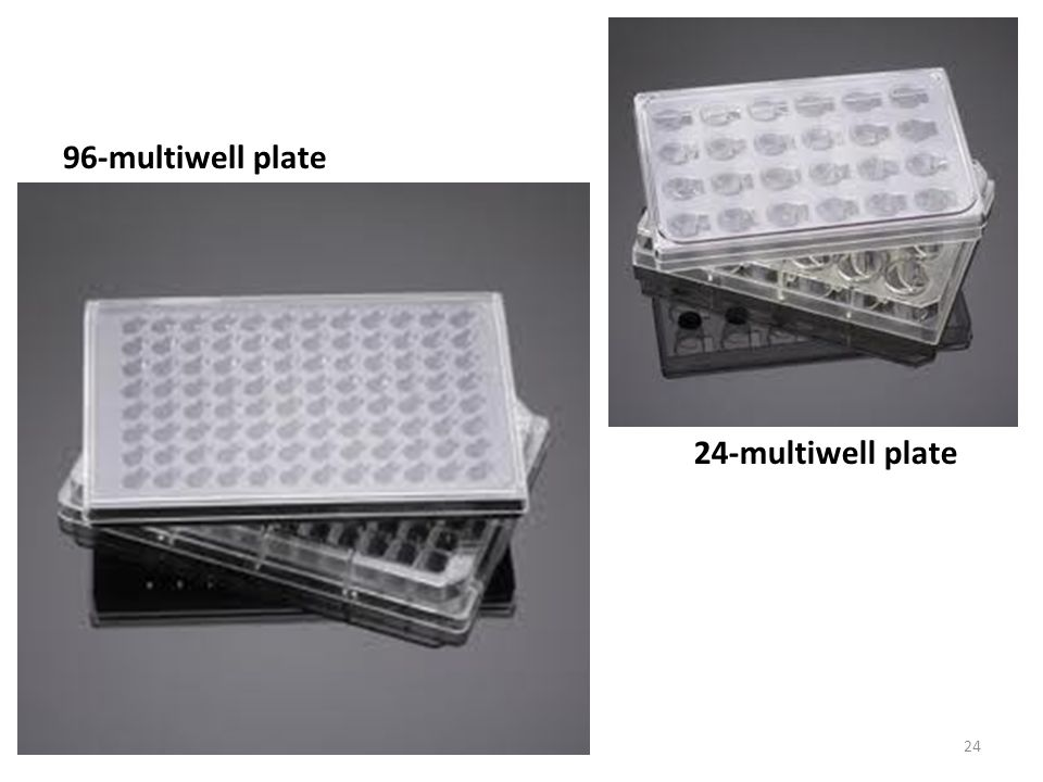 96-multiwell plate 24-multiwell plate