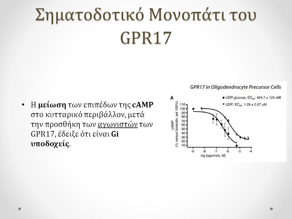 Σηματοδοτικό Μονοπάτι του GPR17